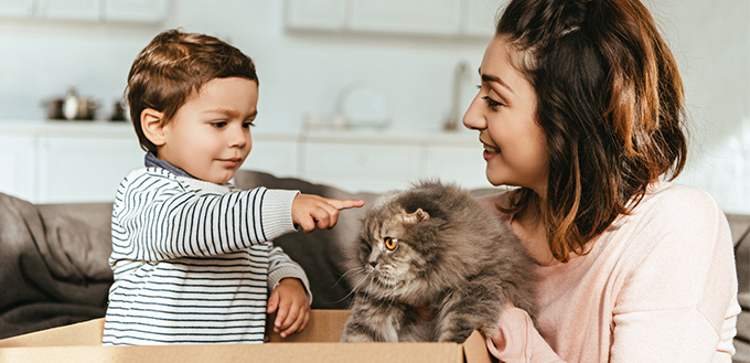 Little boy pointing by finger at british longhair cat