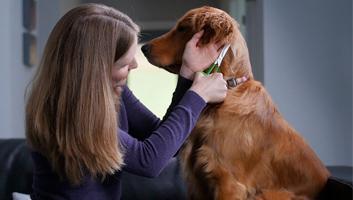 best dog thinning shears