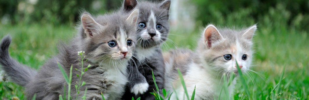 taming feral kittens