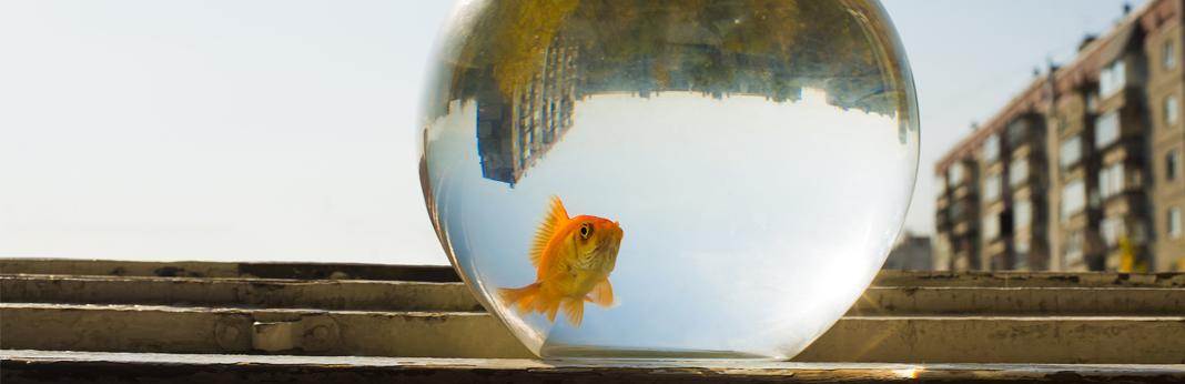 goldfish-tank-size