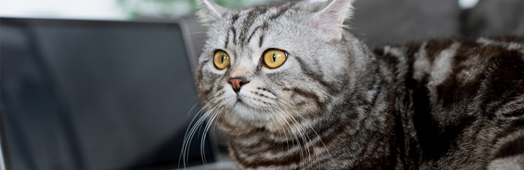 How Long Can A Cat Go Without Peeing?   My Pet Needs That