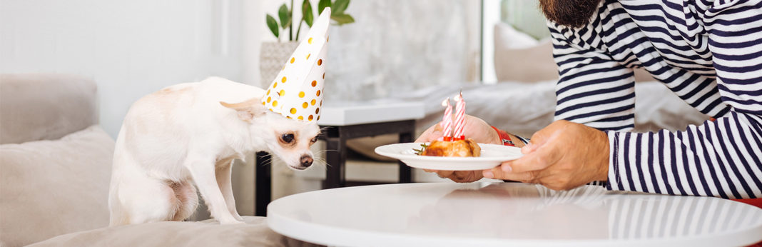 how to make birthday cake for dog