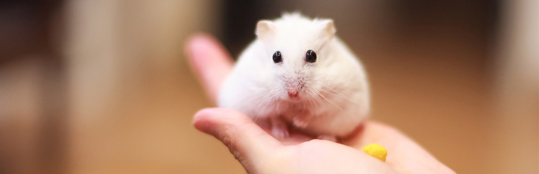 how-to-tame-a-hamster