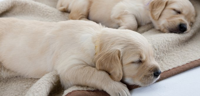 puppies on a blanket