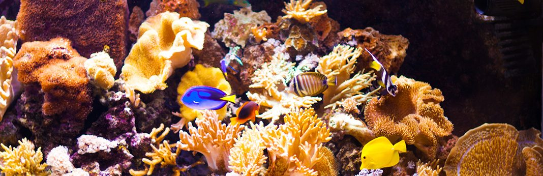 the ultimate guide to aquarium live and dry rock