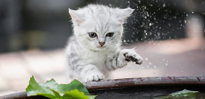 Cute kitten shakes