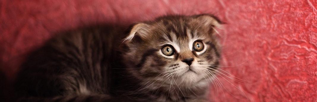 Do Cats Get Headaches