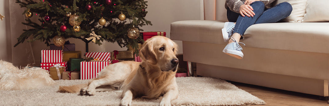 How-to-Keep-Dog-Away-from-Christmas-Tree