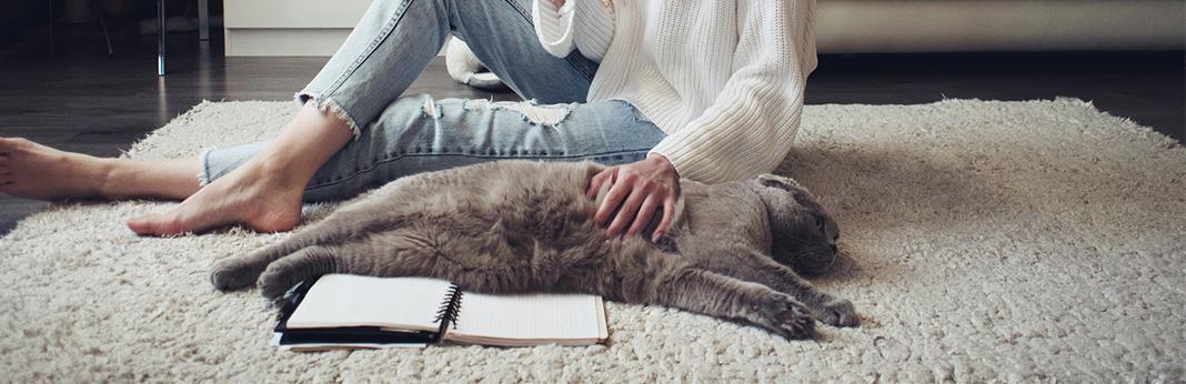 Should-You-Massage-Your-Cat