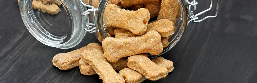 how-to-make-pumpkin-dog-treats