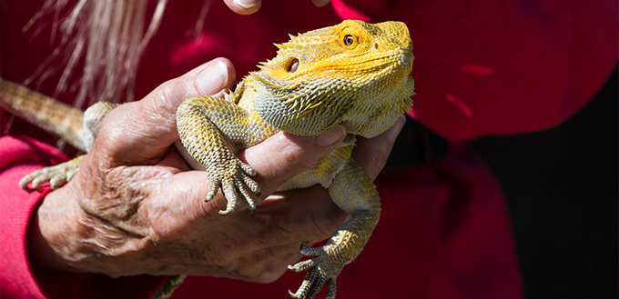 woman holding Bearded Dragon