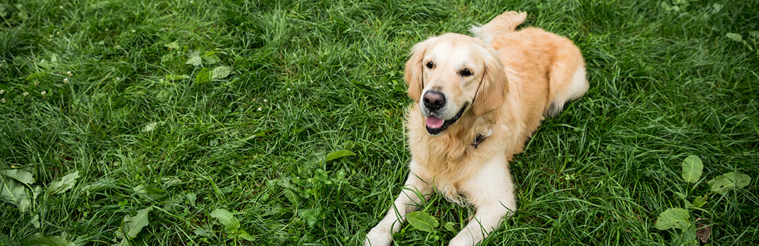 3-Ways-to-Tell-if-Your-Dog-Is-Deaf