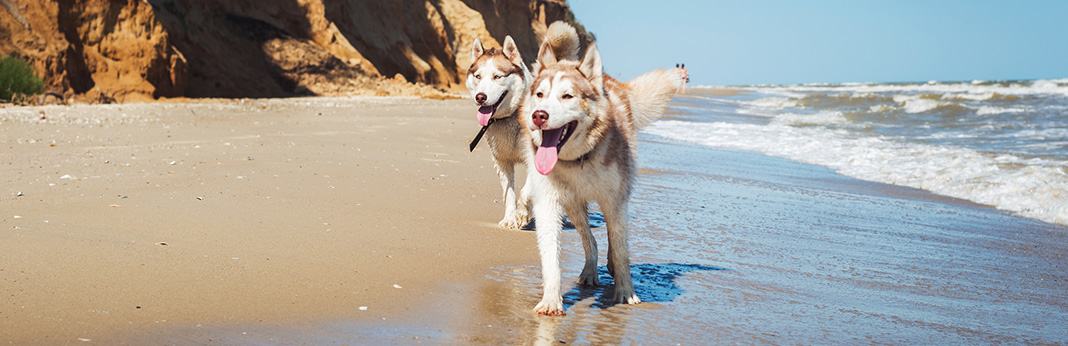 Can-Dogs-Recognize-Their-Own-Breed