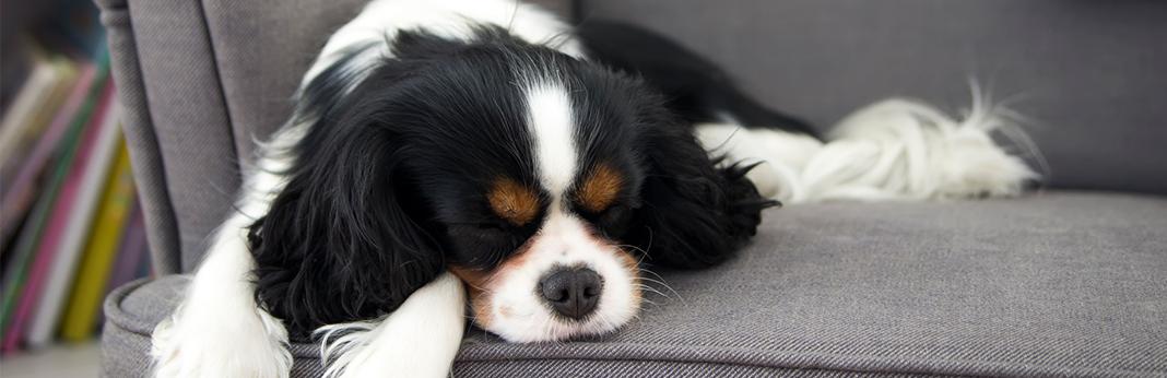 Do-dogs-get-headaches