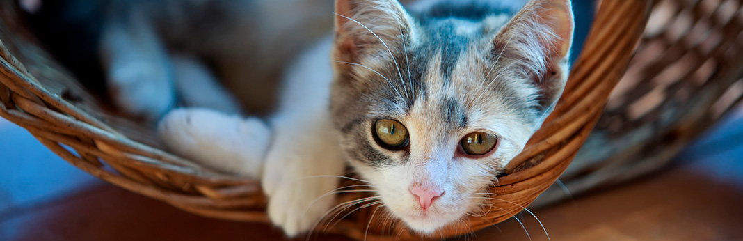 autism-in-cats-can-kitties-be-autistic