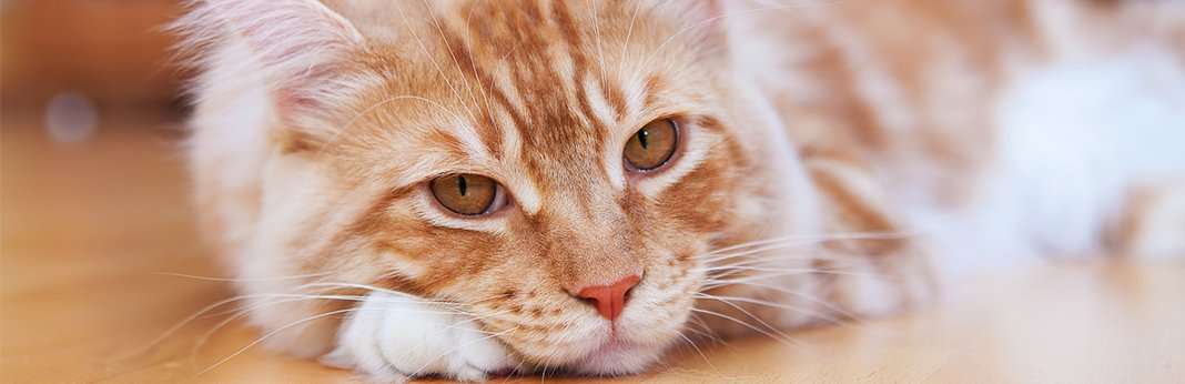 can-cats-be-mentally-ill
