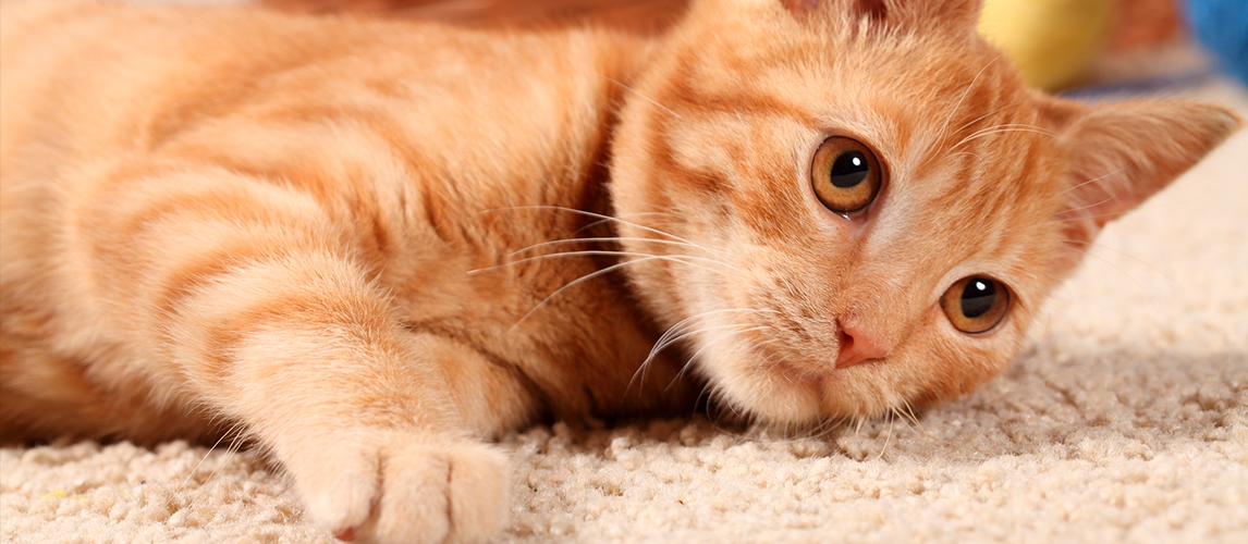 1-best-laser-pointers-for-cats