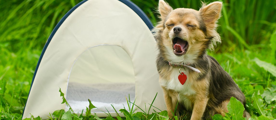 10-best-dog-tents
