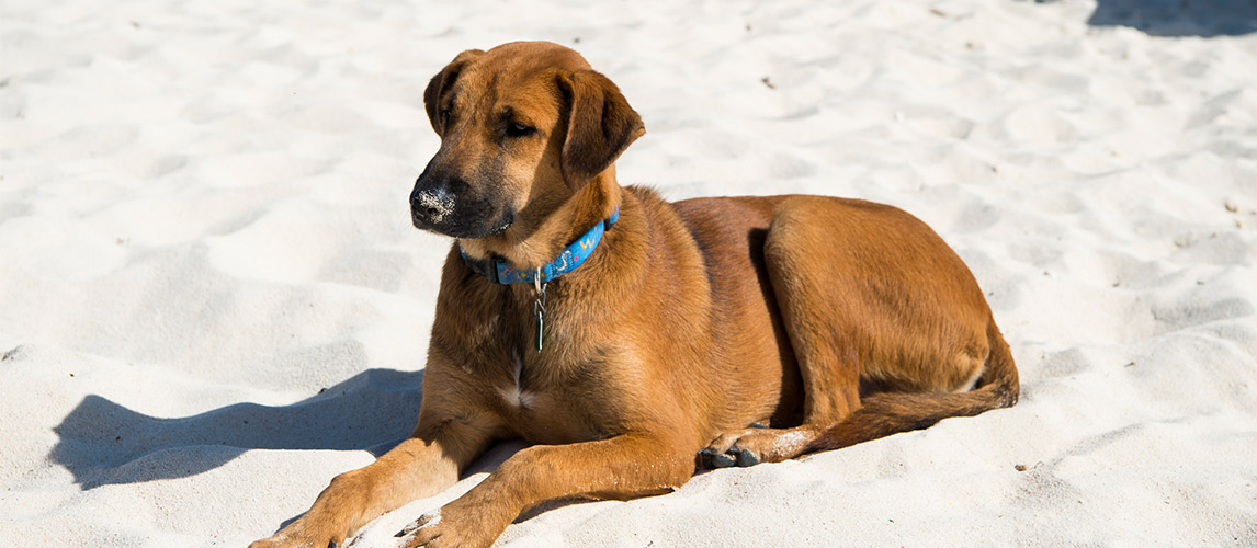 Bark-Collar-For-Dogs1
