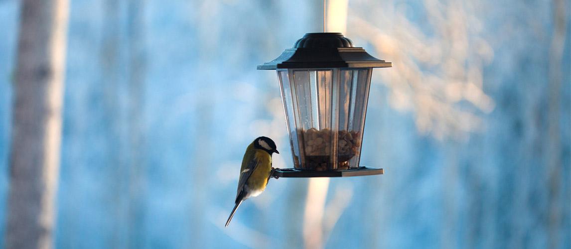 Best-Bird-Feeders