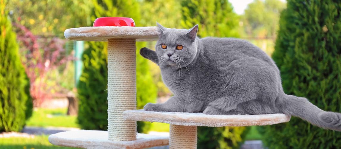 Best-Cat-Condos-for-Kitties