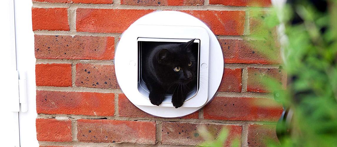 Best-Cat-Doors1