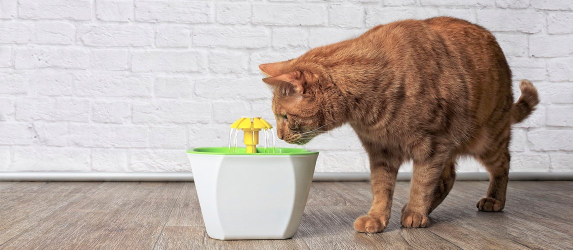 Best-Cat-Water-Fountains