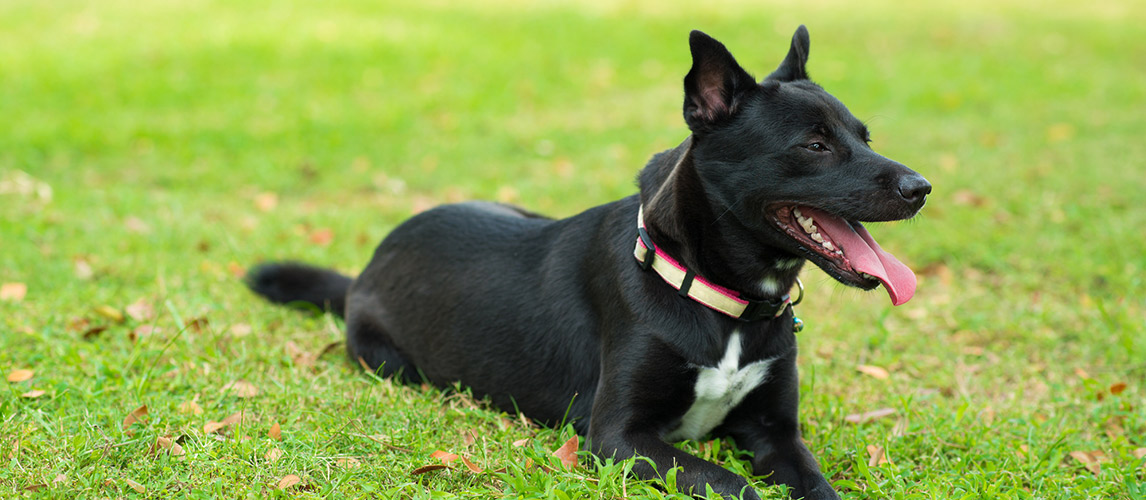 Best-Dog-Collars1