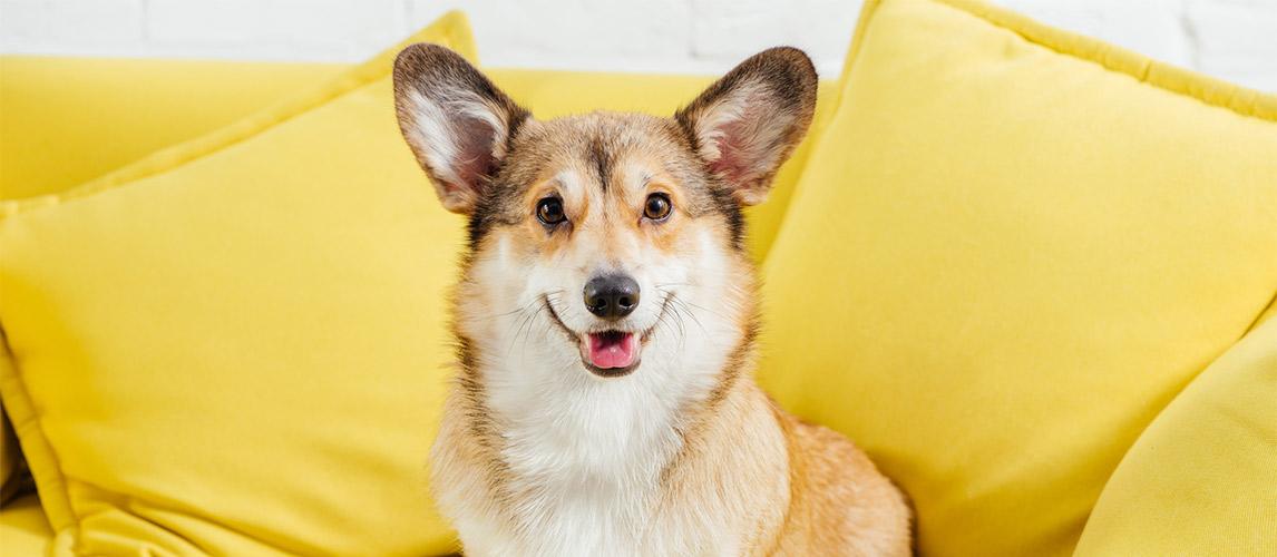 Best-Dog-Dental-Spray