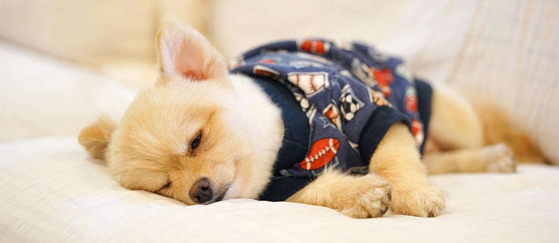 Best-Dog-Pajamas
