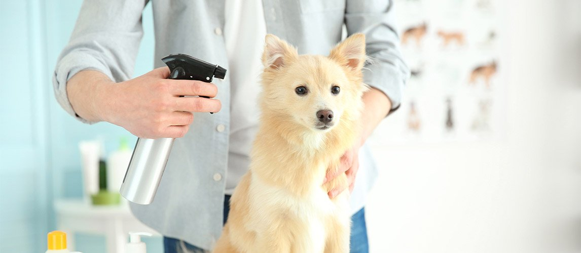The Best Dry Shampoo For Dogs Review In 2019