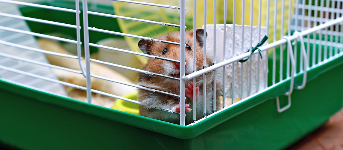 Best-Hamster-Cages