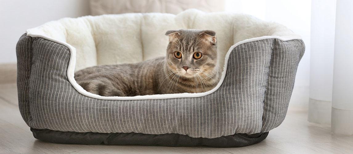Best-Heated-Cat-Beds