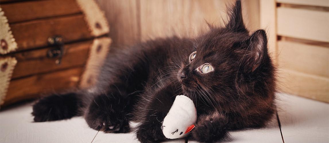 Best-Interactive-Cat-Toys