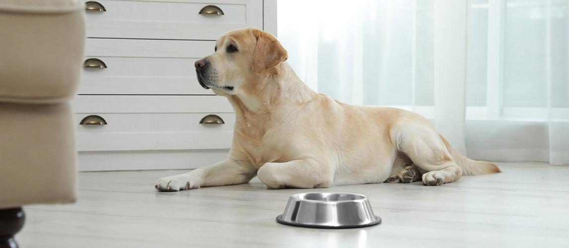 Best-Slow-Feeder-Dog-Bowls