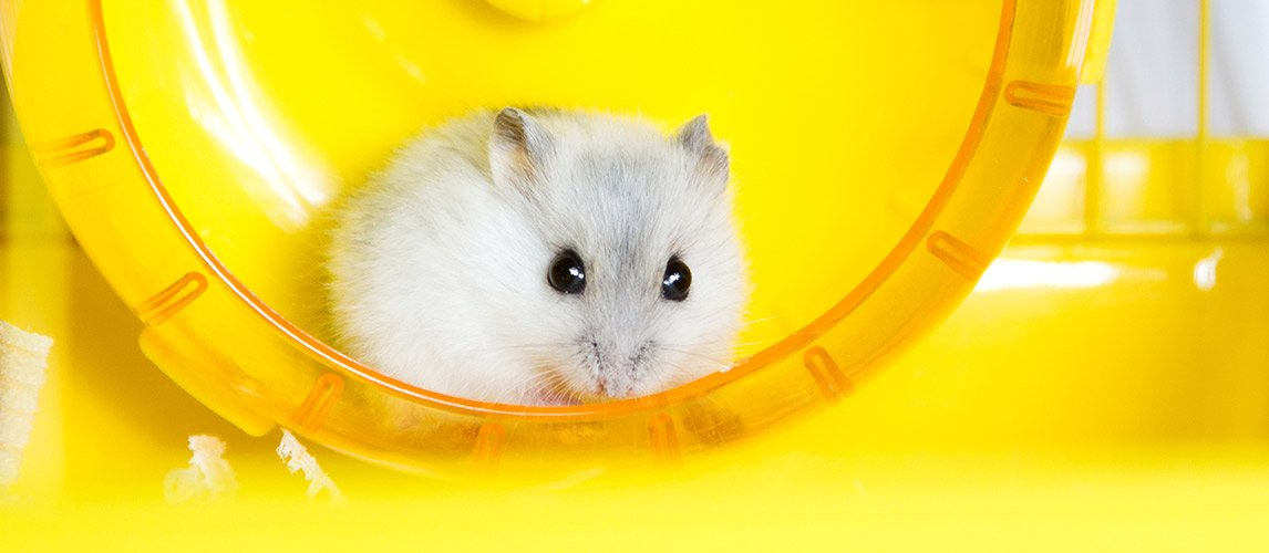 Best-Toys-For-Hamsters
