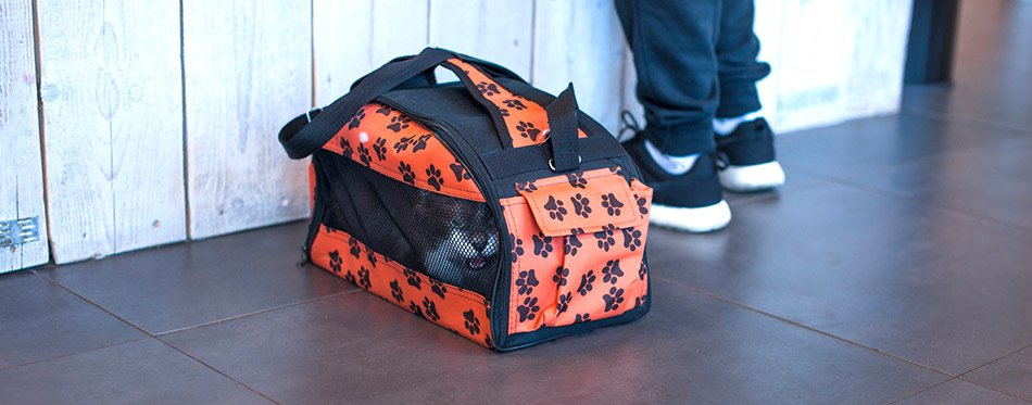 Cat in a carrying bag