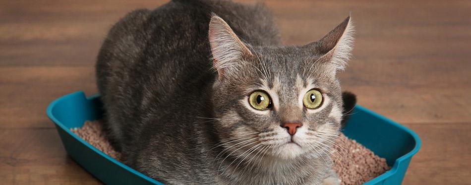 Cute-cat-in--litter-box
