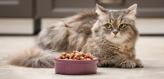 Cute cat near bowl