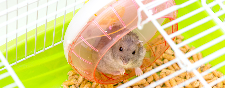 Cute hamster sitting in a cage