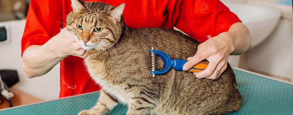 Grooming-cat