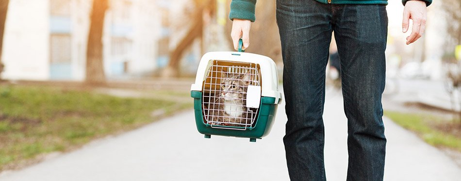 Man with cat in a pet carrier