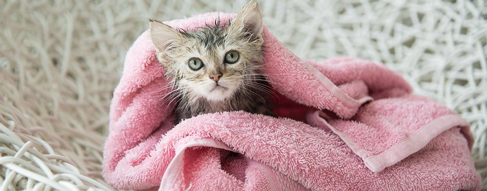Soggy kitten after a bath