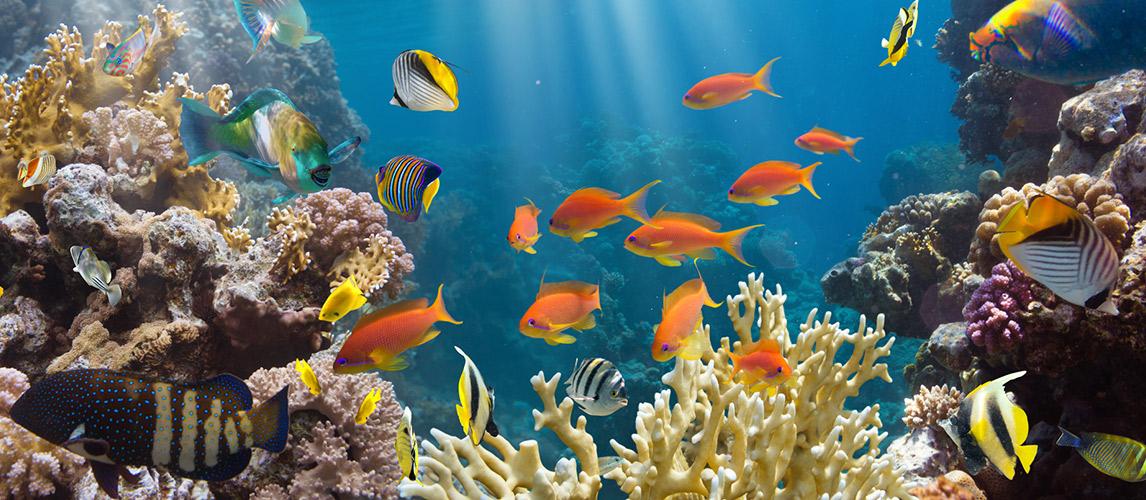 The-Best-Aquarium-Substrate
