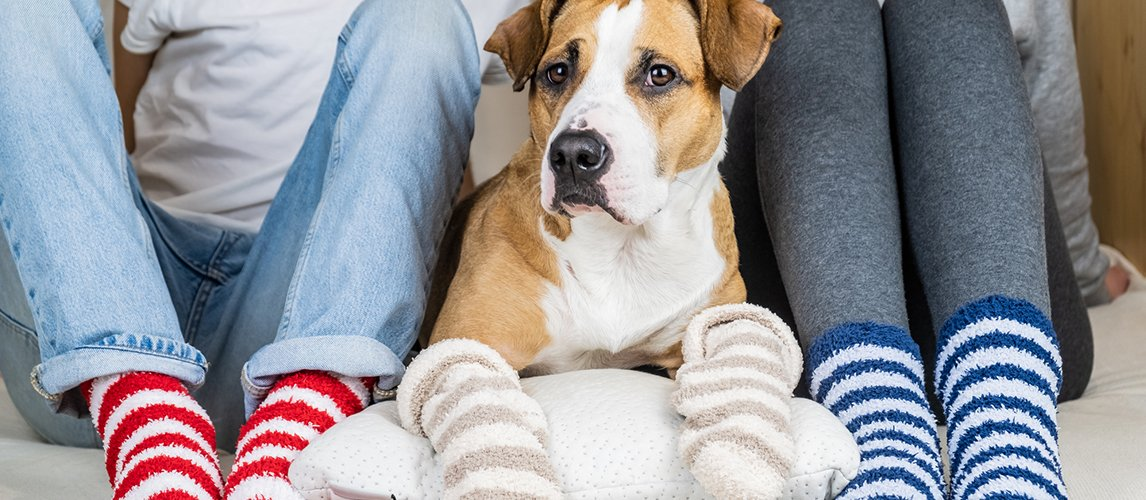 The-Best-Socks-for-Dogs