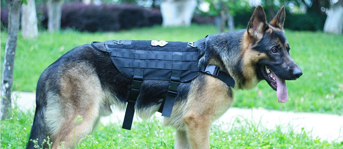 9c749eafb2d6 The Best Tactical Dog Vests (Review) in 2019   My Pet Needs That