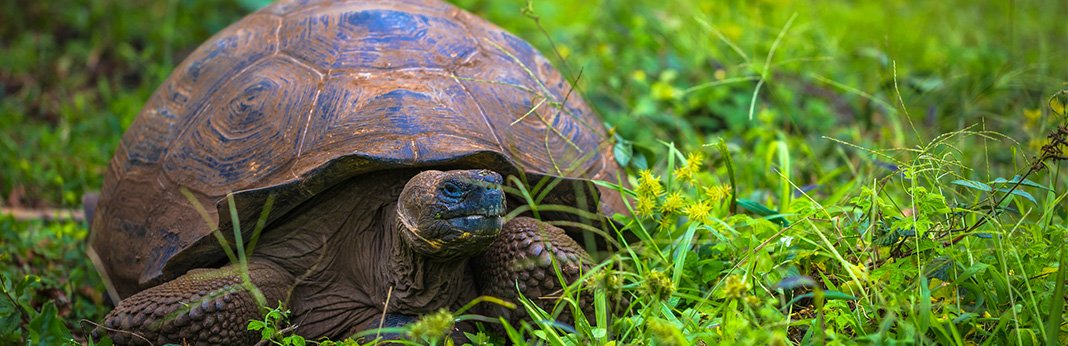 Turtle-vs-Tortoise1