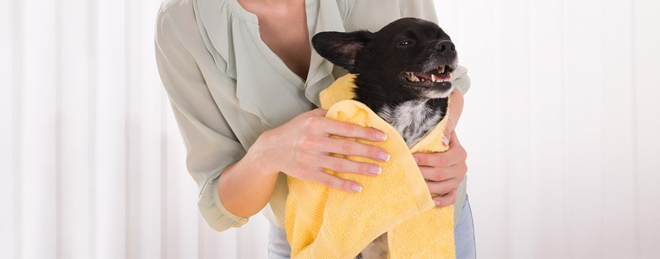 Woman Drying a Dog With Towel