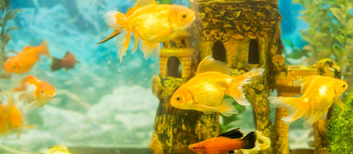 best-aquarium-chillers