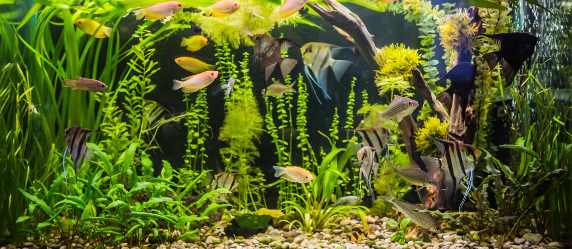 best-aquarium-led-light